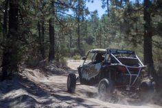Legends Rally Pine Forest Loop